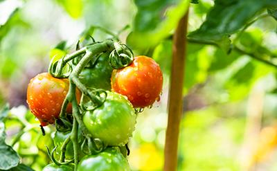食品・農業